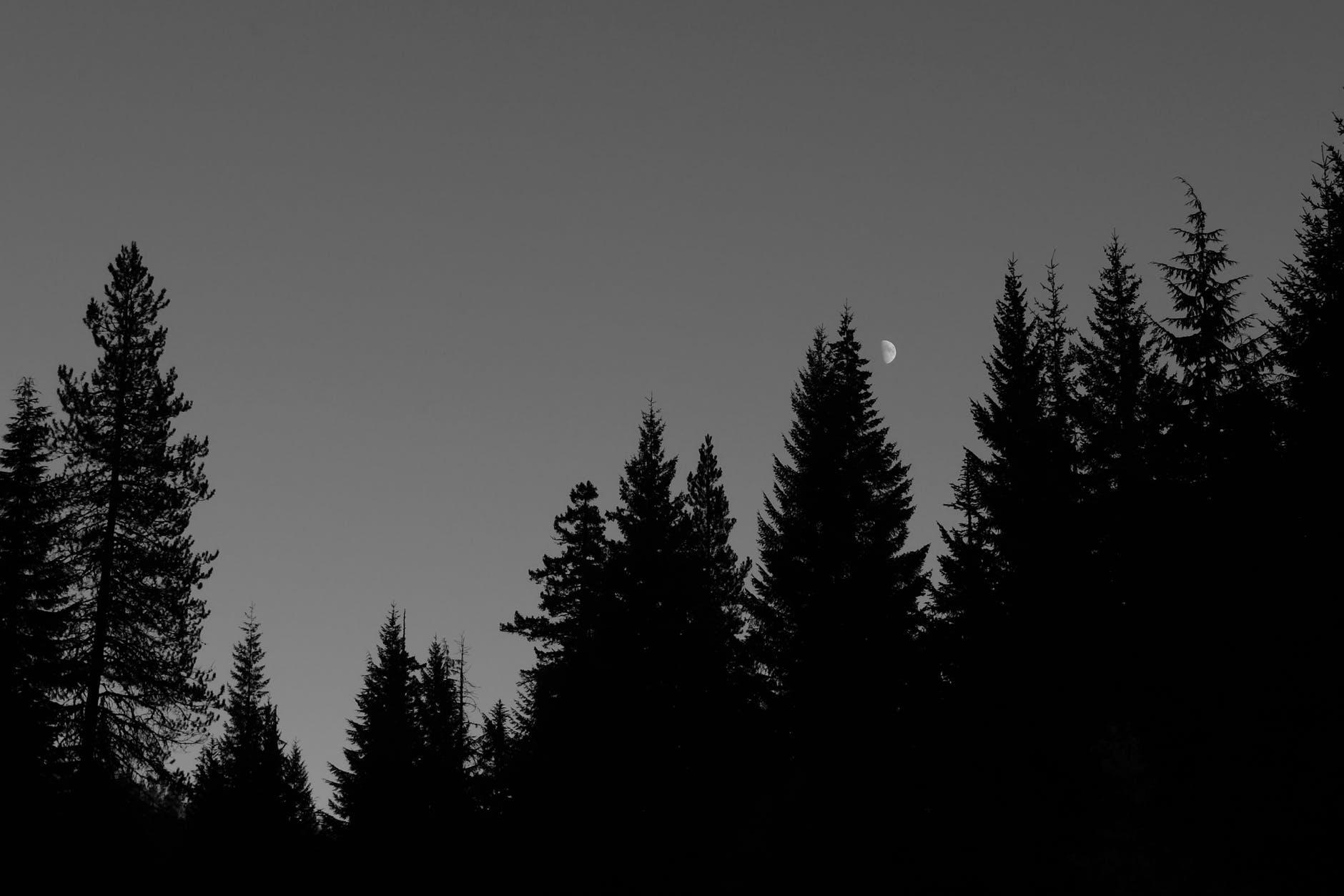 pexels-photo-5810252.jpeg